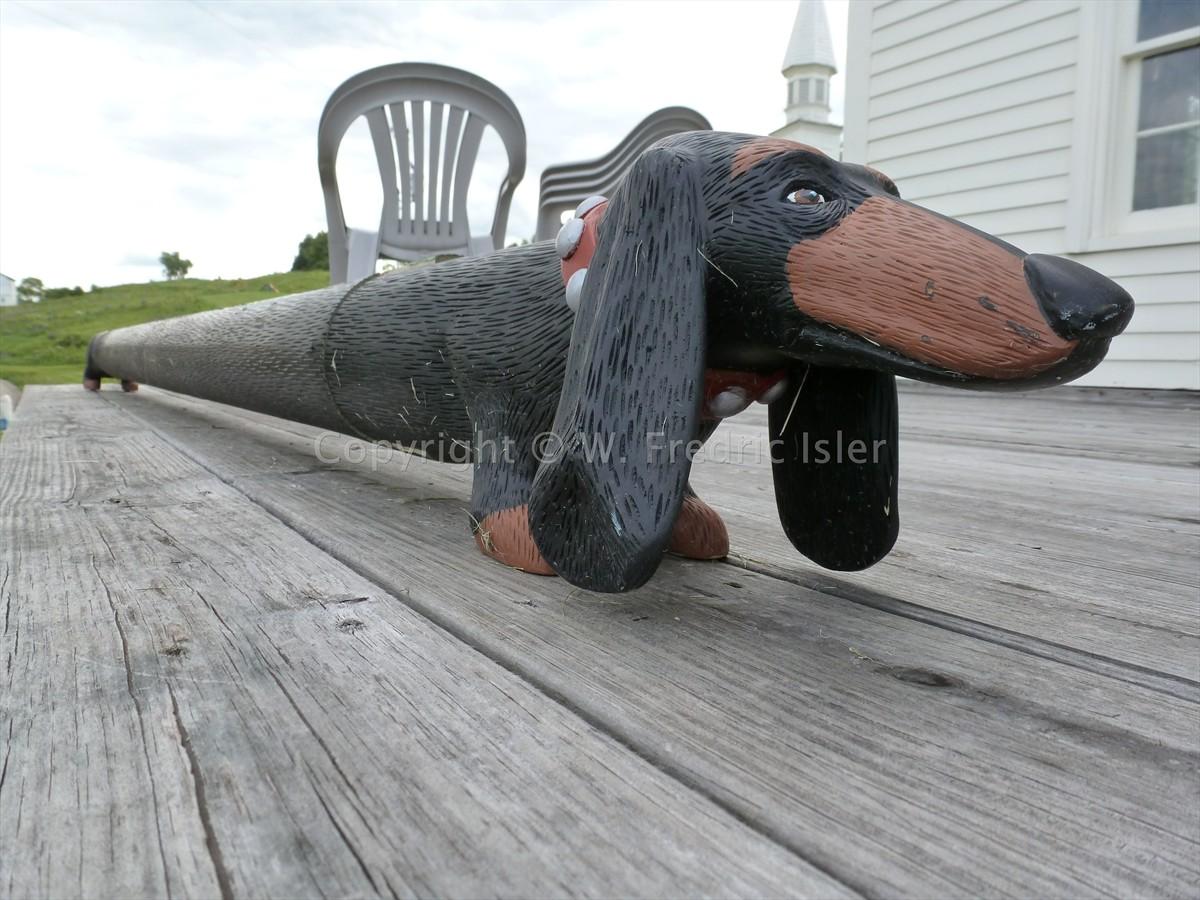A very special dachshund
