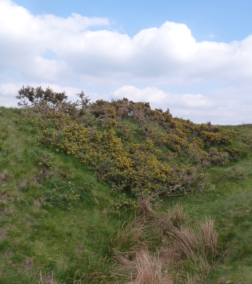 gorse (top) and reeds (bottom) near ground zero