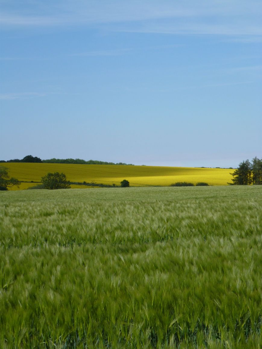 near Rennington, Northumberland, 16 June