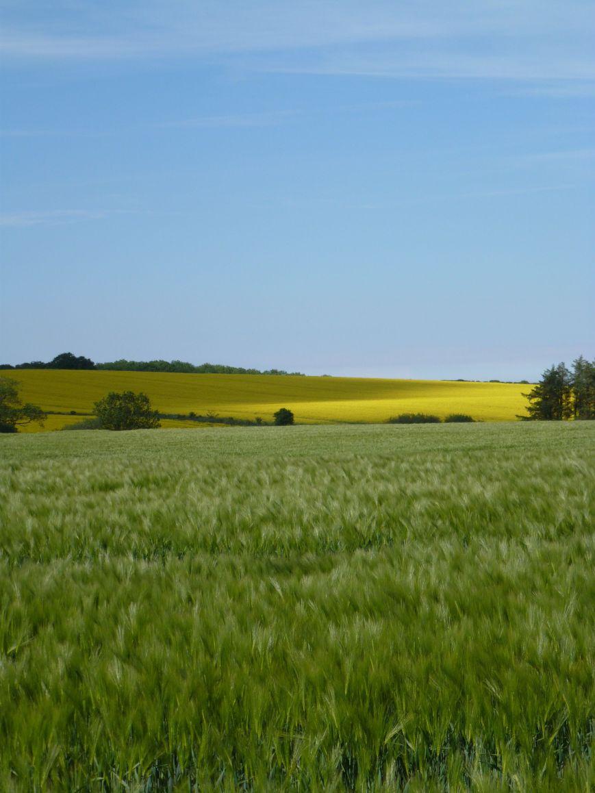 near Rennington, Northumberland, 16 June
